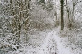 chemin dans la foret sous la neige
